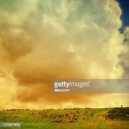 Sheep grazing in hill at sunrise : Stock Photo