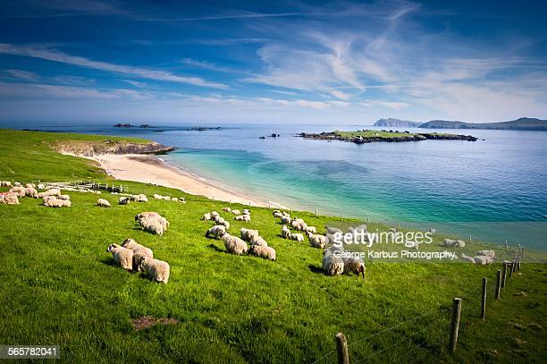 Dingle Peninsula Stock Photos And Pictures  Getty Images