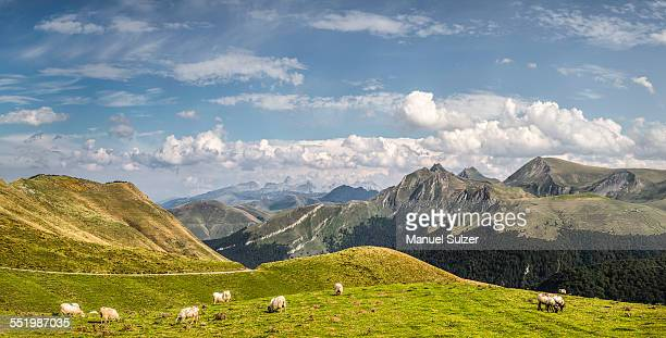 Sheep grazing, Saint-Michel, Pyrenees, France (Near the Spanish-French border)