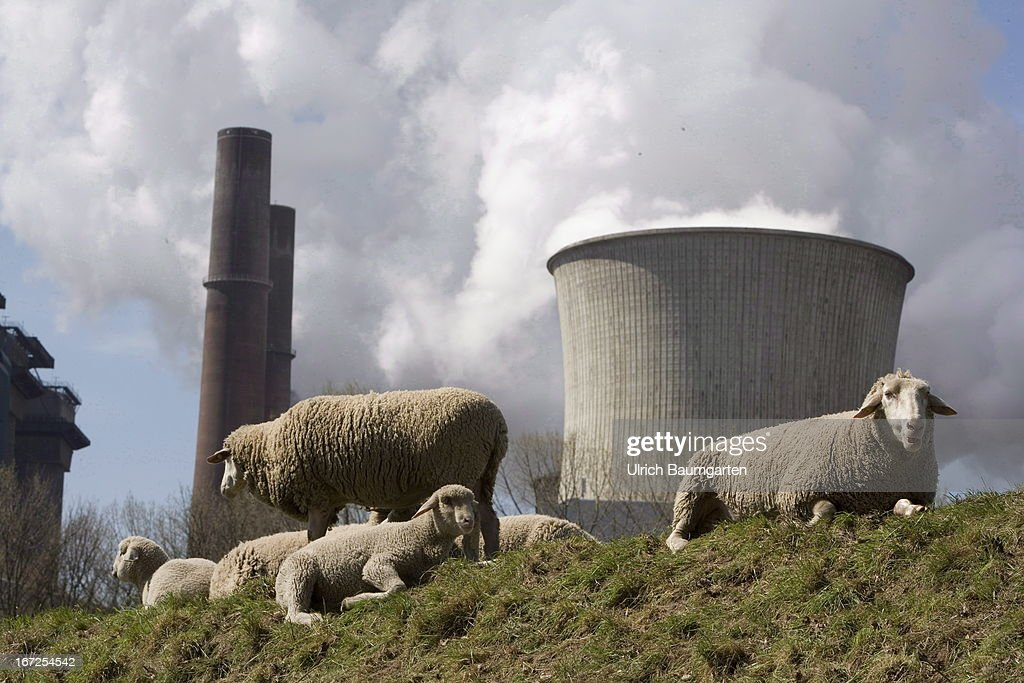 Sheep in front of the brown goal power plant Niederaussem of the RWE Power AG on April 20, 2013 in Niederaussem, Germany.