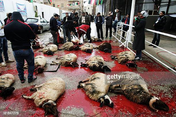 Sheep lie in a pool of blood after they were slaughtered as part of celebrations marking the second anniversary of the start of the Libyan revolution...