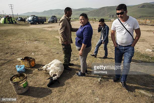 A sheep lies with its legs bound at a livestock market on the outskirts of Ulaanbaatar Mongolia on Wednesday July 13 2016 The nation's growth slowed...