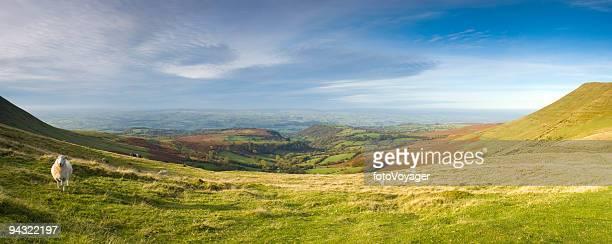 Sheep on mountainside