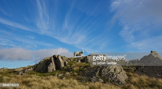 Sheep on Rock in Lake District