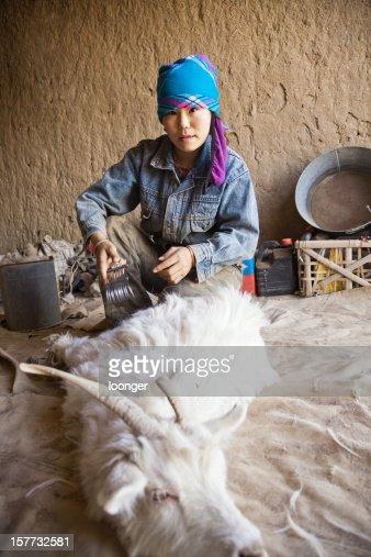 sheep shearing in home