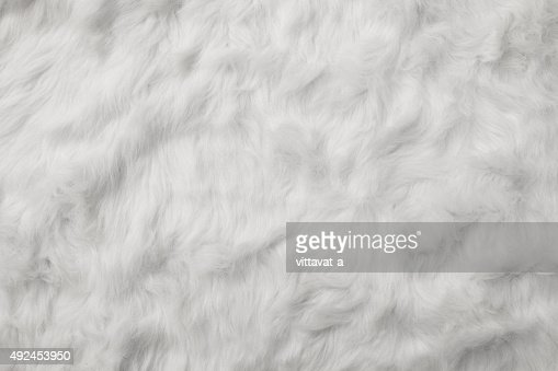 Sheep Wool as background : Stock Photo