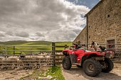 Sheepdog watching sheep from a quad bike.  Sheep are behind a gate and the dog is on the rear of the quad bike.  The Yorkshire dales are in the background.