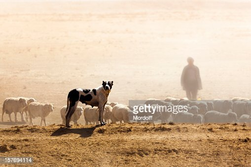 Sheeps, Dog and Shepherd