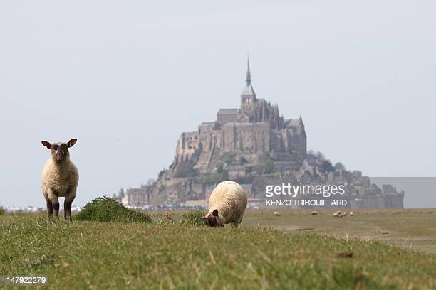 Sheeps graze on a meadow that is covered during high tides by Mont SaintMichel abbey in northwestern France on April 21 2010 The causeway between...