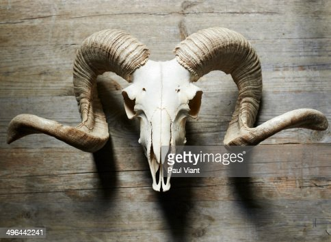 Animal Skull Photography