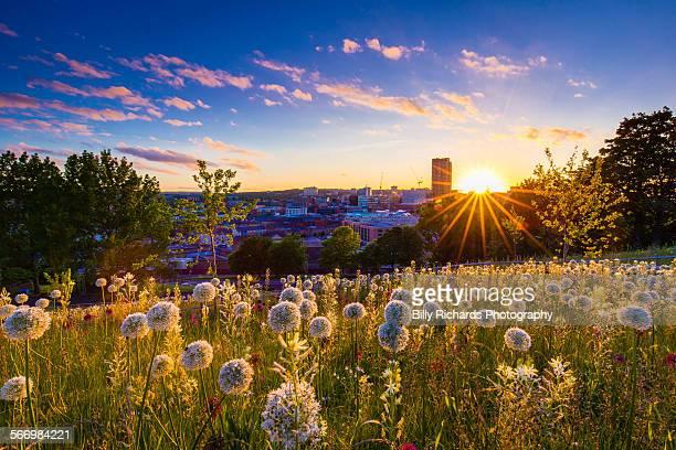 Sheffield sunset