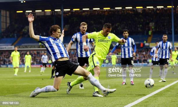 Sheffield Wednesday's Glenn Loovens and Brighton's Tomer Hemed
