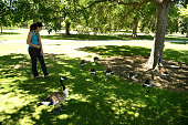 Sheila Rasouli checks out the Canada geese near Ferril Lake in City Park on July 21 2016 in Denver Colorado The park attracts lots of geese which are...