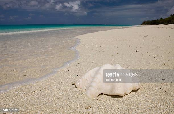 Shell at Bikini Beach Marshall Islands Bikini Atoll Micronesia Pacific Ocean