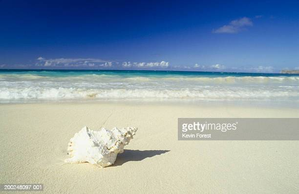 Shell lying on beach