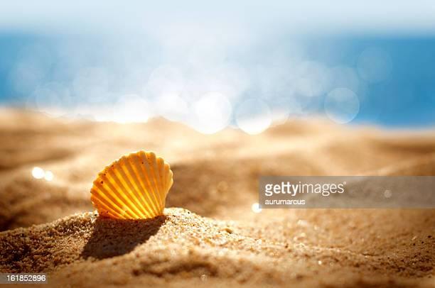Carcasa en la playa