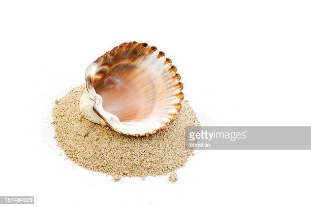 Shell on a heap of sand