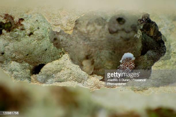 Shell on rocks