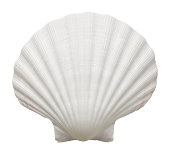 Close up of ocean shell isolated on white background