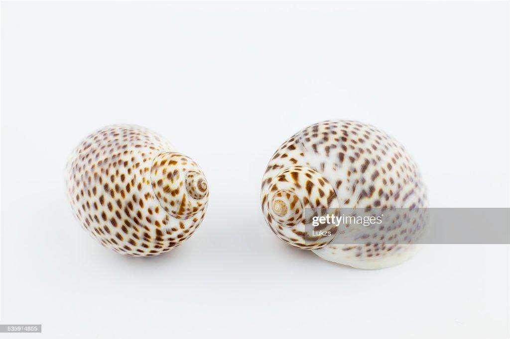 Shell : Stock Photo