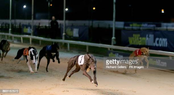 Shellam Delano wins the Great North Run Final Race eight at Newcastle during the William Hill All England Cup Festival at Newcastle Greyhound Stadium