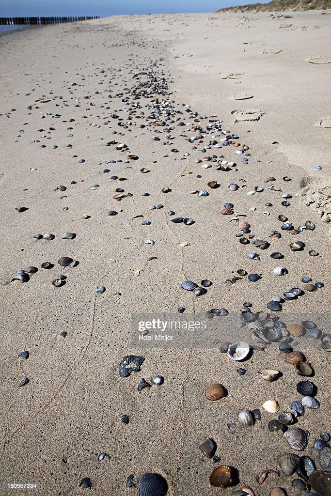 Shells on North Sea beach