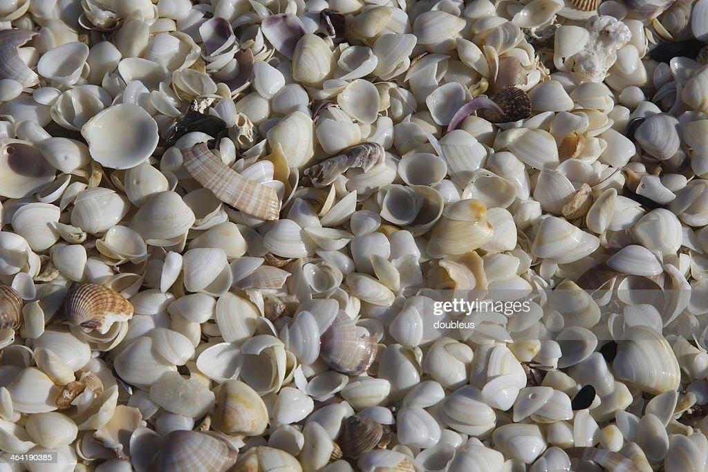 Shells : Stock Photo