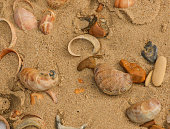 Looking at some shells on the beach