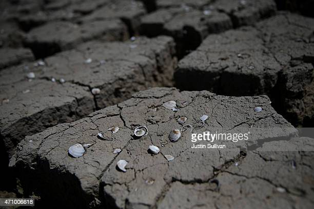 Shells remain on dry cracked earth that used to be the bottom of an irrigation ditch on April 24 2015 in Firebaugh California As California enters...