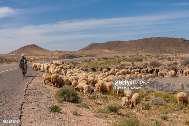 Shepard with sheep on desert road in Morocco.