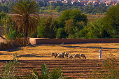 Shepherd at Taourirt Kasbah Ouarzazate UNESCO World Heritage Site Ouarzazate Province Morocco North Africa