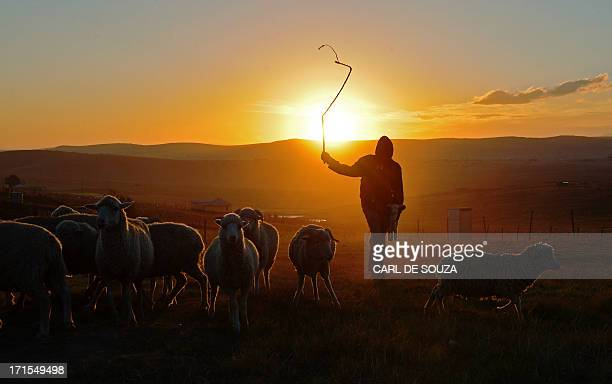 A shepherd boy is silhouetted on June 26 in Qunu a rural village where former South African President Nelson Mandela grew up Mandela's close family...
