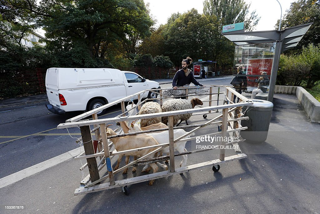 A shepherd brings his sheep in a paddock to a sheepfold on its opening day on October 4, 2012, in Bagnolet, a Paris suburb. This shepherd will feed his sheep daily in different districts in town. AFP PHOTO / FRANCOIS GUILLOT