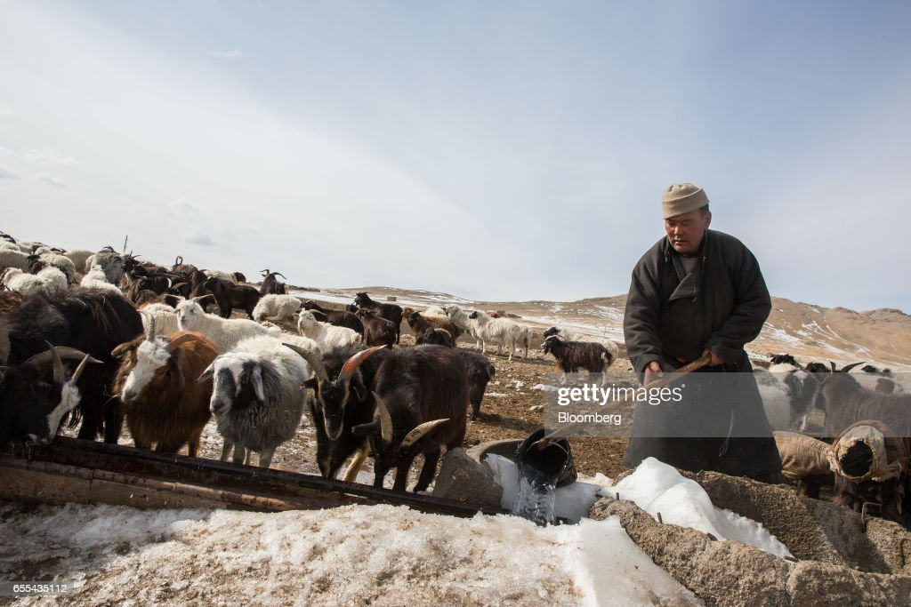 A shepherd collects water from a well for a herd of goats in Tosontsengel, Zavkhan Province, Mongolia, on Saturday, March 11, 2017. Mongolia's gross domestic product is expected to expand eight percent by 2019, and then grown at around five to six percent after that, International Monetary Fund (IMF) Mission Chief for Mongolia, Koshy Mathai, said in an interview last month with Bloomberg Mongolia TV. Photographer: Taylor Weidman/Bloomberg via Getty Images