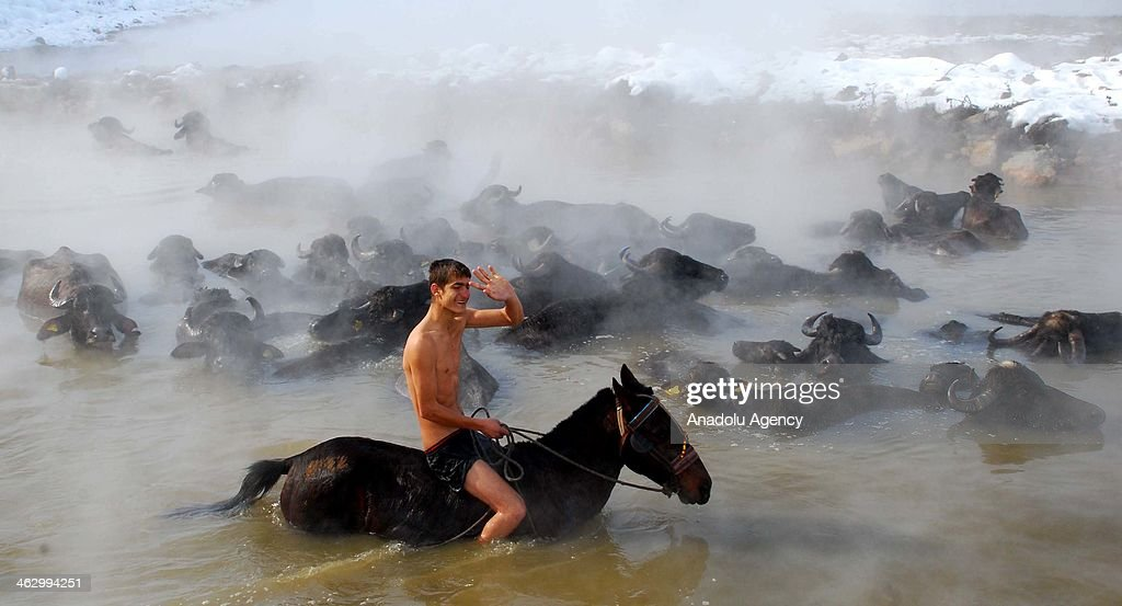 A shepherd enjoys bathing in the healing water of 35 celcius in Budakli village of Bitlis, Turkey on January 16, 2014. The healing water in Budakli village of Bitlis is a beaten track for the shepherds to bring the horses and buffaloes during the winter time when its subfreezing.