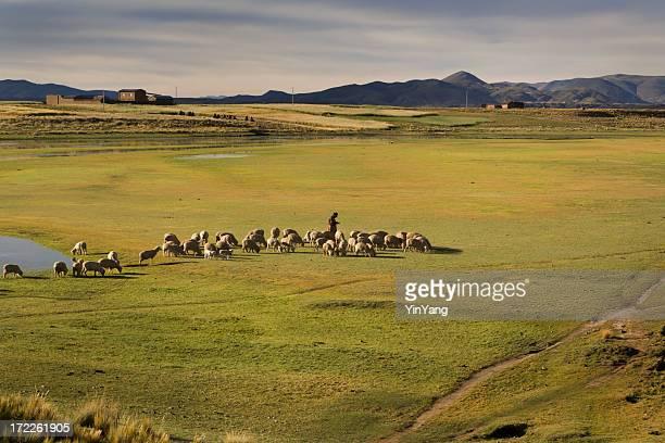 羊飼いの農家の遊牧がある羊、子羊のアンデス山脈、南アメリカ、ペルー共和国