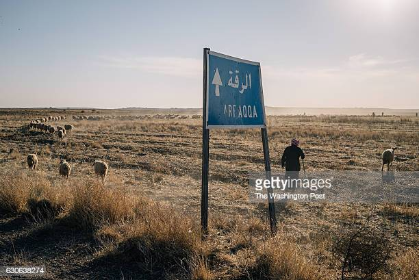 A shepherd passes by a sign indicating the direction to Raqqa city