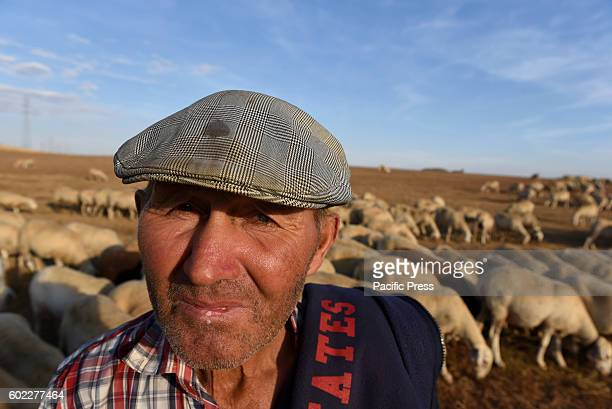 A shepherd pictured with his flock of sheep in Morón de Almazán north of Spain