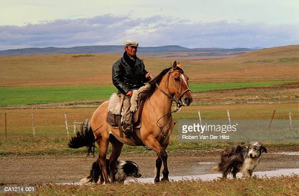 Shepherd riding on horseback, with two dogs, Argentina