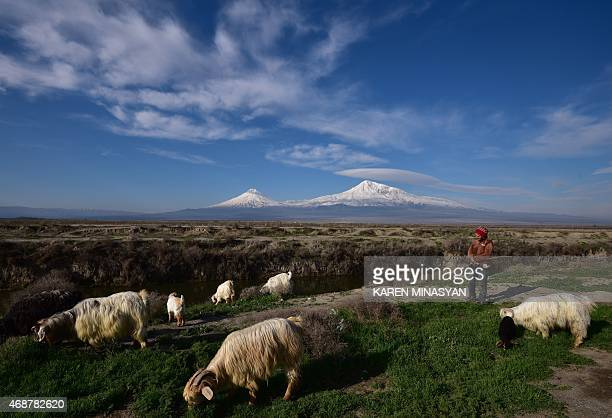 A shepherd stands by her flock of goats on the foothills of Mount Ararat in Armenia on April 6 2015 AFP PHOTO / KAREN MINASYAN