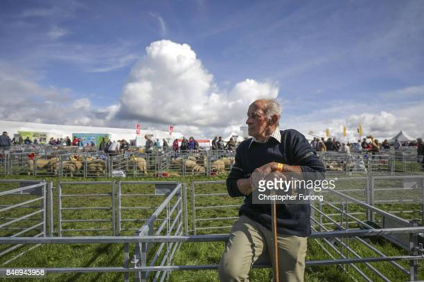 A shepherd watches the sheep judging during the Westmorland County Show on September 14 2017 in Milnthorpe England The Westmorland County Show is...