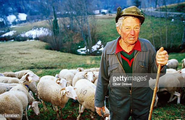Shepherd with his flock in Pyrenees.