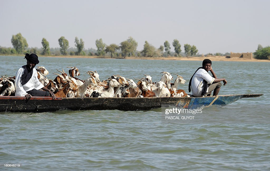 Shepherds sit in a pirogue with their cattle as they travel on the Niger river, near Timbuktu, on February 4, 2013. French fighter jets pounded Islamist supply bases in northern Mali to flush the insurgents out of hiding as Paris pushed on February 4, 2013 for African troops to quickly take over the offensive. Dozens of French warplanes carried out massive air strikes on rebel training and logistics centres in the area around their last stronghold of Kidal over the weekend in the mountainous northeast of the landlocked county. AFP PHOTO / PASCAL GUYOT