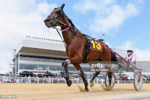Sheree Tomlinson driving Zachary Binx warms up prior to Race 1 Garrards Horse Hound Handicap Trot during New Zealand Trotting Cup Day at Addington...