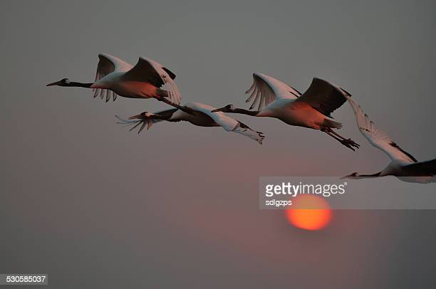 Sheyang Red Crowned Crane Reserve