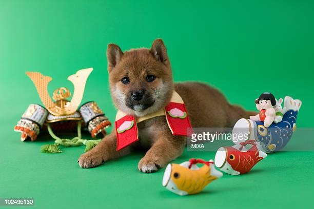 Shiba Puppy and Children's Day Celebration