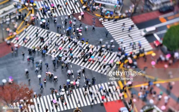 Shibuya Crossing aerial view at rain