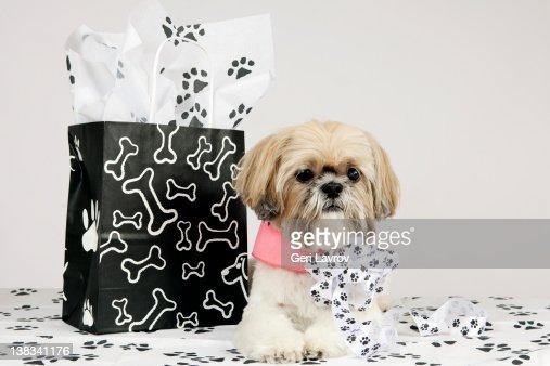 Shih Tzu dog by shopping bag : Foto stock
