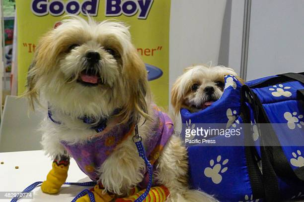 A shih tzu smiles at the spectators while the other one is in a blue bag Different breeds of dogs and cats Dog breeders Pet lovers unite for the same...