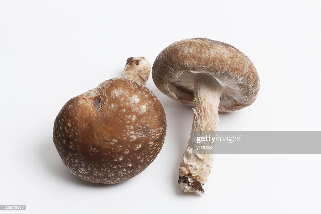 Shiitake mushroom : Stock Photo